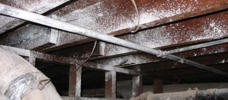 biological growth on floor joists in crawlspace without insulation nor vapor barrier